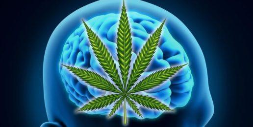 Bad to the Brain: Marijuana's Effects on Adolescents
